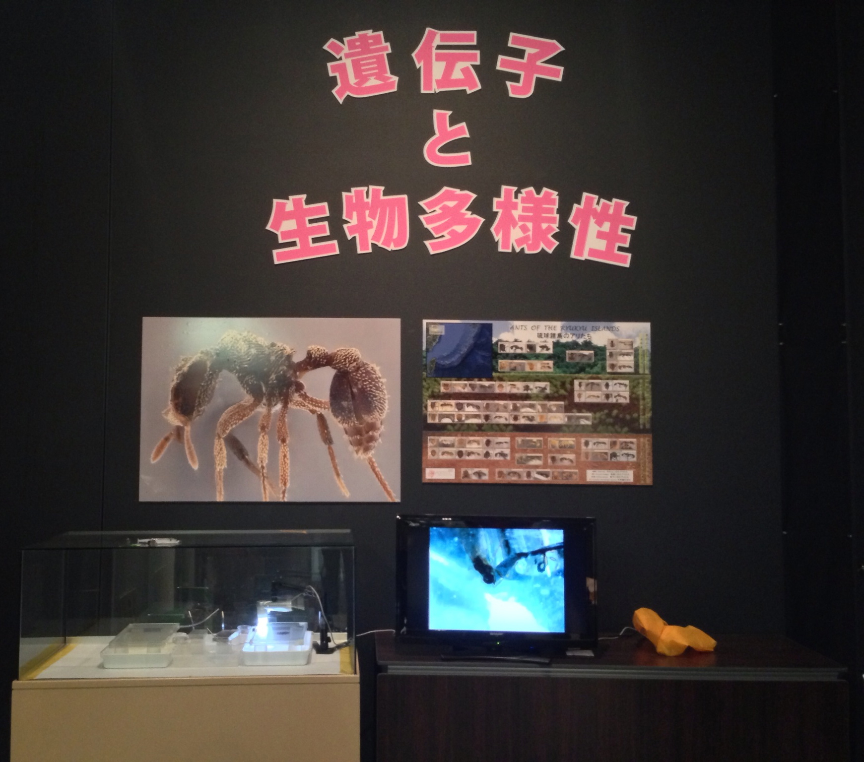Ant exhibit at the Okinawa Prefectural Museum.