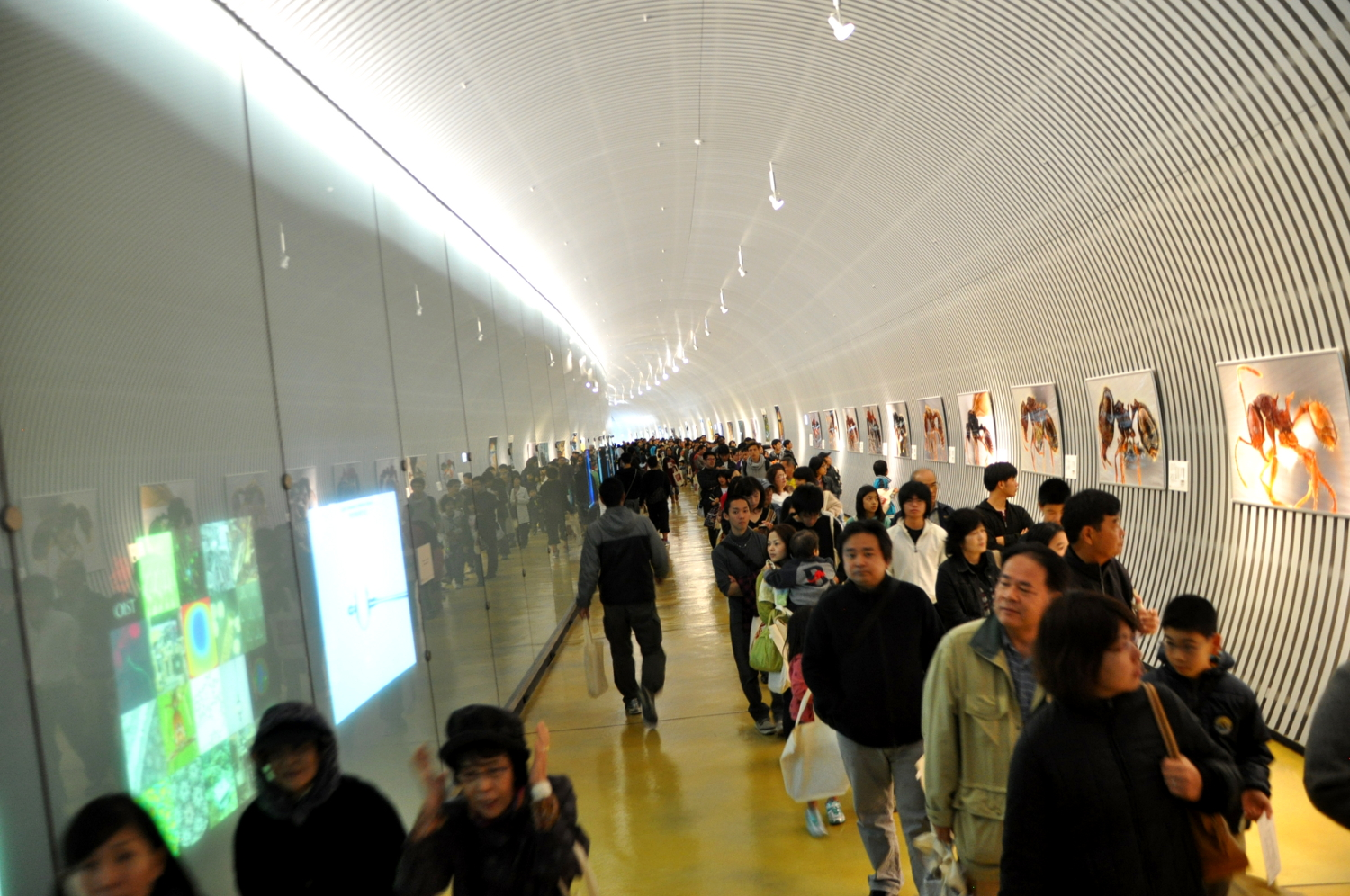 Visitors in the OIST Tunnel, displaying giant photographs of ants. Photo: OIST.