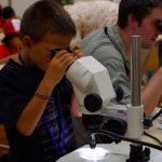 Children's School of Science: examining insects